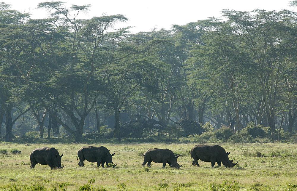 2 Day Lake Nakuru and Naivasha Road Safari from Nairobi