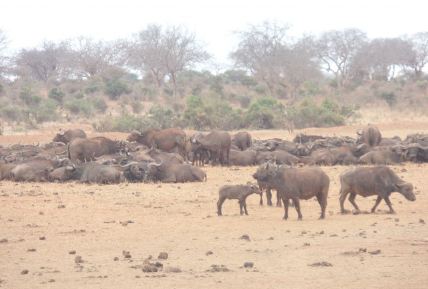 Aj Tours and safaris