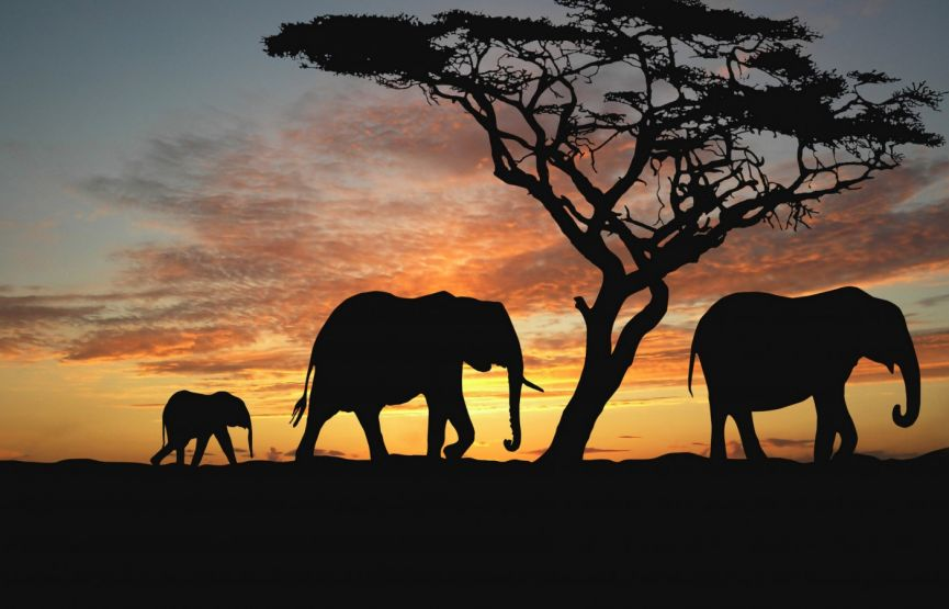 african-savanna-1440x900-elephants-sunset-silhouette-4255